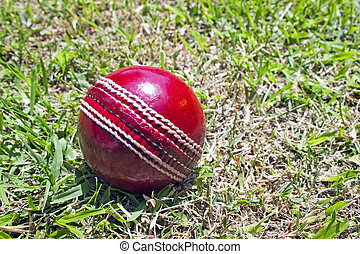 New Red Cricket Ball On Patchy Grass Lawn