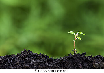 New seedling sprouting from ground - Close up of a new...