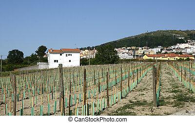 New Vineyard in Portugal