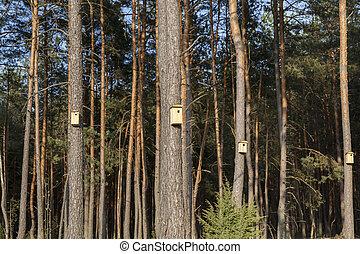 new wooden birdhouses