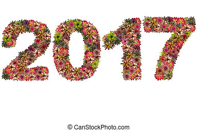 New year 2017 made from bromeliad flowers isolated on white background