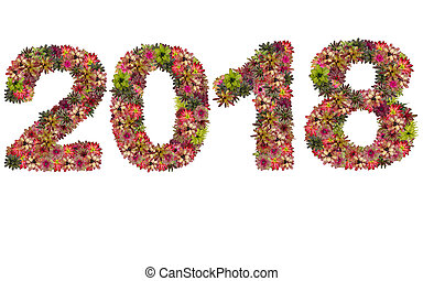 New year 2018 made from bromeliad flowers isolated on white background