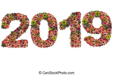 New year 2019 made from bromeliad flowers isolated on white...