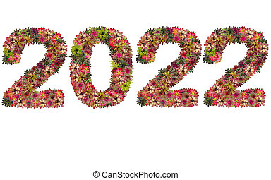 New year 2022 made from bromeliad flowers isolated on white background