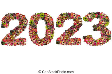 New year 2023 made from bromeliad flowers isolated on white background