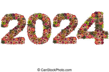 New year 2024 made from bromeliad flowers isolated on white background