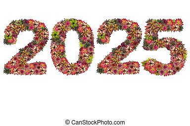 New year 2025 made from bromeliad flowers isolated on white background