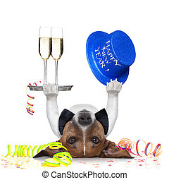 dog celebrating with champagne and a blue happy new year hat lying upside down