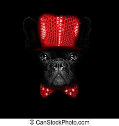 new years eve dog on black backgroud