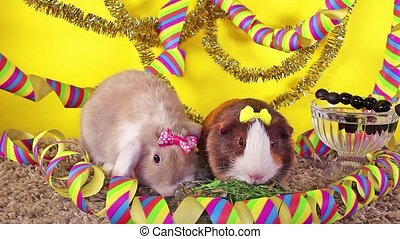 New year's eve party happy new year pet animal concept