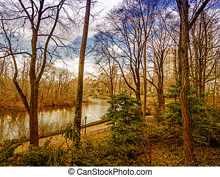 New York City - Beautiful vegetation of Central Park in winter