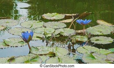 new york, fleurs, lac, parc, central