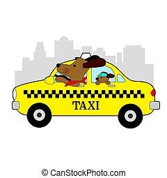 New York Taxi Dog