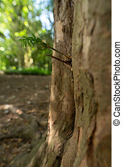 New young little branch of tree growing out of the tree trunk with small leaves, forest wood in spring