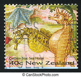 Sea Horse - NEW ZEALAND - CIRCA 1996: stamp printed by New ...