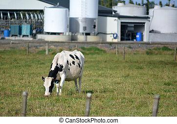 New Zealand Dairy Industry