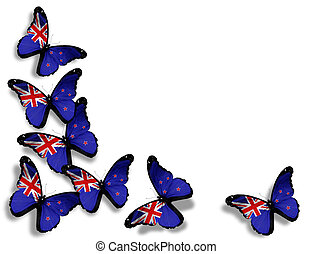 New Zealand flag butterflies, isolated on white background