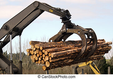 KAITAIA, NZ - JULY 30:Tractor carrying logs on July 30 2013. It's New Zealand third largest export earner with international sales in excess of $4 billion.