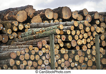 New Zealand Forest Products - WHANGAREI,NZ - JULY 28:Pile of...