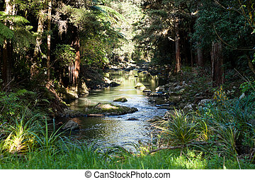 New Zealand green forest - Green forest. Whangarei, New ...