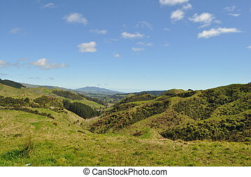 New Zealand hills and landscape with meadows