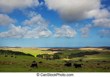 New Zealand hills