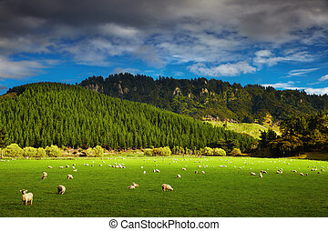 Landscape with forest and grazing sheep, North Island, New Zealand