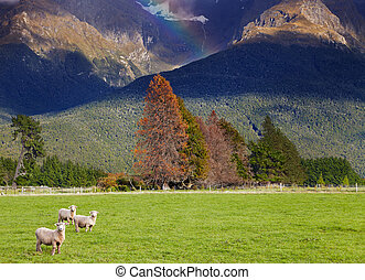 New Zealand landscape, South Island