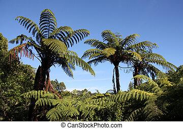 New Zealand native bush forest. Green hill at Coromandel peninsula. Punga endemic tree ferns.