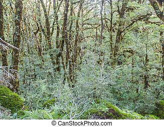 Beautiful rainforest of new zealand  Beautiful rainforest