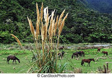 New Zealand South Island Pancake Rocks - Wild horses in...