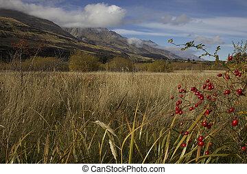 Southern Alps of New Zealand. Around Glenorchy New Zealand