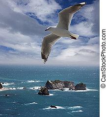 New Zealand - Tasman Sea and rocks by Three Mile Lagoon