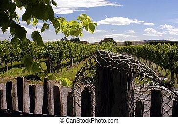 Hurunui Vineyard, South Island, New Zealand.