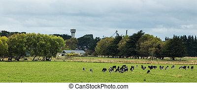 New Zealnd Farmland