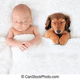 Newborn baby and puppy - Sleeping newborn baby alongside a...