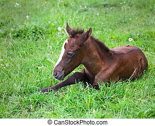 Newborn baby horse on the green grass