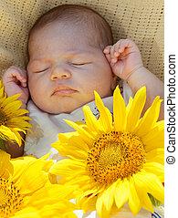 Newborn baby sleeps among big sunflowers