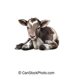 Newborn Calf, black and white baby cow, on the white ...