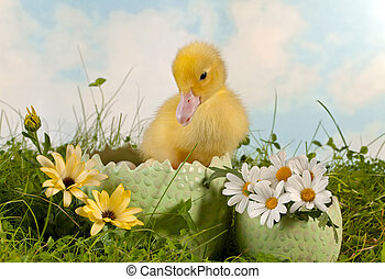 Newborn duckling in the garden