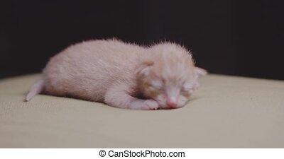 Newborn kitten on the pillow - Newborn ginger kitten on the...