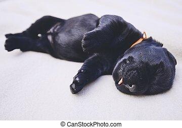 Newborn of dog
