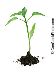 newborn plant with soil on white #2 - newborn plant with...