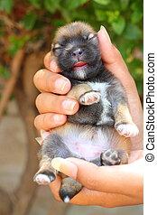 newborn puppy blind in human hands