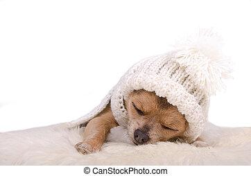 Newborn puppy sleeping lying on white fluffy fur