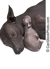 Newborn puppy with mother