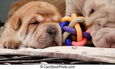 Newborn Shar Pei Dog Pups in a Basket