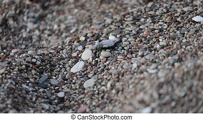 Newborn turtles run to the sea wave, close-up of a turtle,...