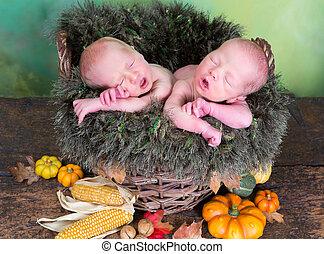 Newborn twins in autumn basket