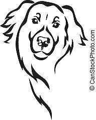 Newfoundland breed dog's head in full face